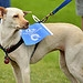 A dog watches the Glasgow 2014 Queen's Baton th...